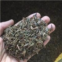 现货供应 四季丁香种子 厂家直销批发价格