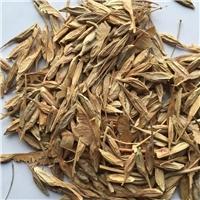 辽宁省糖槭种子东北糖槭种子厂