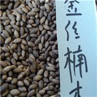 九江金丝楠种子.金丝楠种子价格