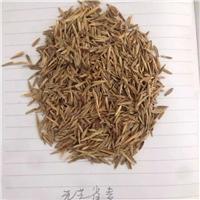 辽宁省无芒雀麦种子东北无芒雀麦种子