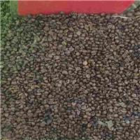 辽宁省 爬山虎种子 多少钱一斤