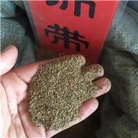 辽宁省锦带种子东北锦带种子