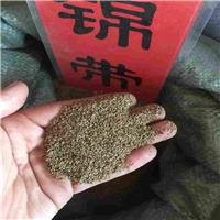 辽宁省 锦带种子 多少钱一斤厂