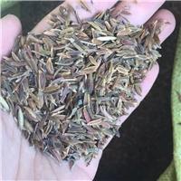 今年新�� 红丁香种子 人工脱壳