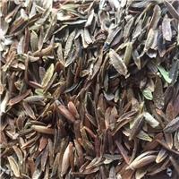 辽宁省红丁香种子东北红丁香种子厂