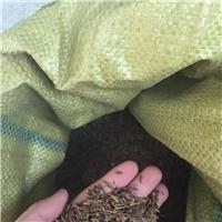现货供应 红丁香种子 厂家批发价格厂