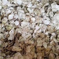今年新�� 白榆种子 净度好 发芽率高
