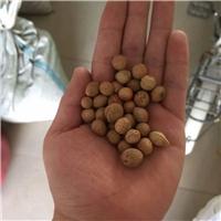 供应 小桃红种子 裂口见芽 发芽率高厂