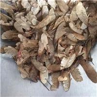 辽宁省三角枫种子东北三角枫种子