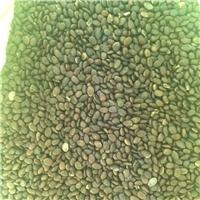 东北 皂角种子  多少钱一斤厂