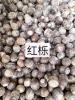 红栎种子批发,九江红栎种子价格