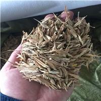 铁岭市新货供应糖槭种子