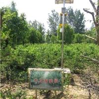 供应多种规格盆栽苗木盆栽木瓜树