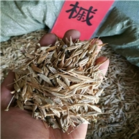 辽宁省糖槭种子新货批发