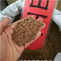 辽宁省山丁子种子厂家直销价格多少钱厂
