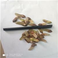 批发供应 五角枫种子 多少钱一斤