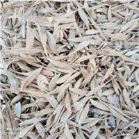 辽宁省 糖槭种子 价格多少钱