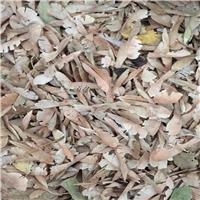 辽宁省铁岭市糖槭种 新货供应