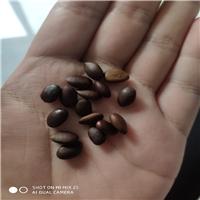 辽宁省皂角种子价格一览表厂