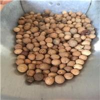 东北 榆叶梅种子 多少钱一斤厂