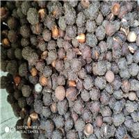 辽宁省 榆叶梅种子 报价多少钱