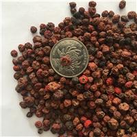灌木火棘种子价格颜轲种业供应新采上市火棘