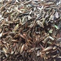 供应 红丁香种子 厂家直销价格