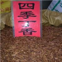 供应 小叶丁香种子 厂家直销批发价格
