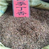 现货供应 四季丁香种子 厂家直销批发价格厂