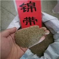 东北 锦带种子 厂家直销价格