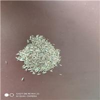 现货供应早熟禾种子培育园林绿化草皮卷