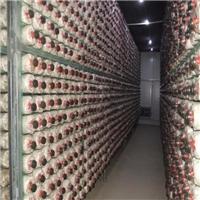 四川养菌架-蘑菇架-批量供应质量有保证