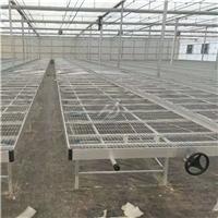 解析温室苗床在现代农业中起到的重要作用