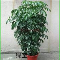 北京丰台区植物租摆公司