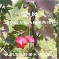 子午岭彩叶吊蝴蝶