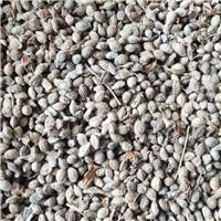 花棒种子价格低/质量好/发货快