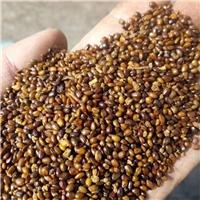 沙棘种子价格低/质量好/发货快