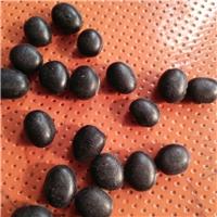 高效经济作物 黑肾豆种子 青仁黑乌豆