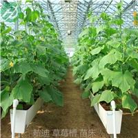 环保立体A字型草莓种植槽定制厂家