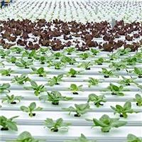 霸州市标准潮汐式移动苗床 厂家生产制造