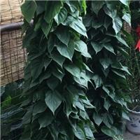 北京办公室植物租摆公司