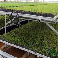 养花育苗移动苗床生产厂