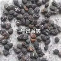 江西乐昌含笑种子基地价格优惠大量批发