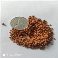 春季播种育苗金银花种子保真保新出芽率高